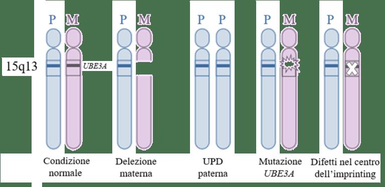 FAST Italia - Fondazione Sindrome di Angelman - FIG 2 Test Diagnostici