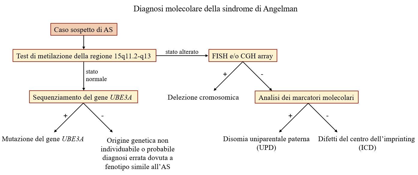 FAST Italia - Fondazione Sindrome di Angelman - FIG 3 Test Diagnostici